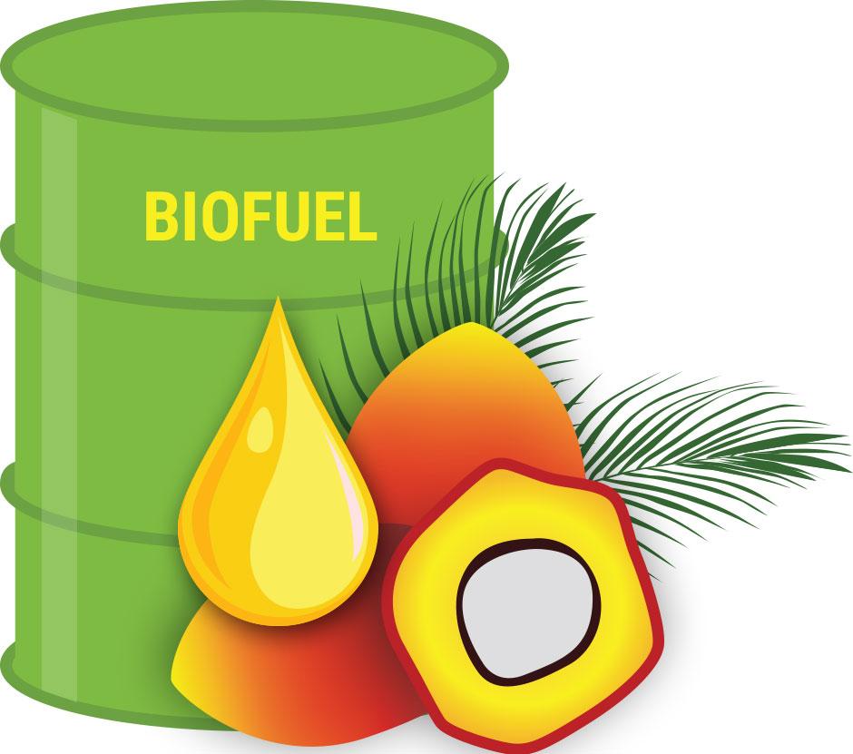 Biofuels – the alternative energy source