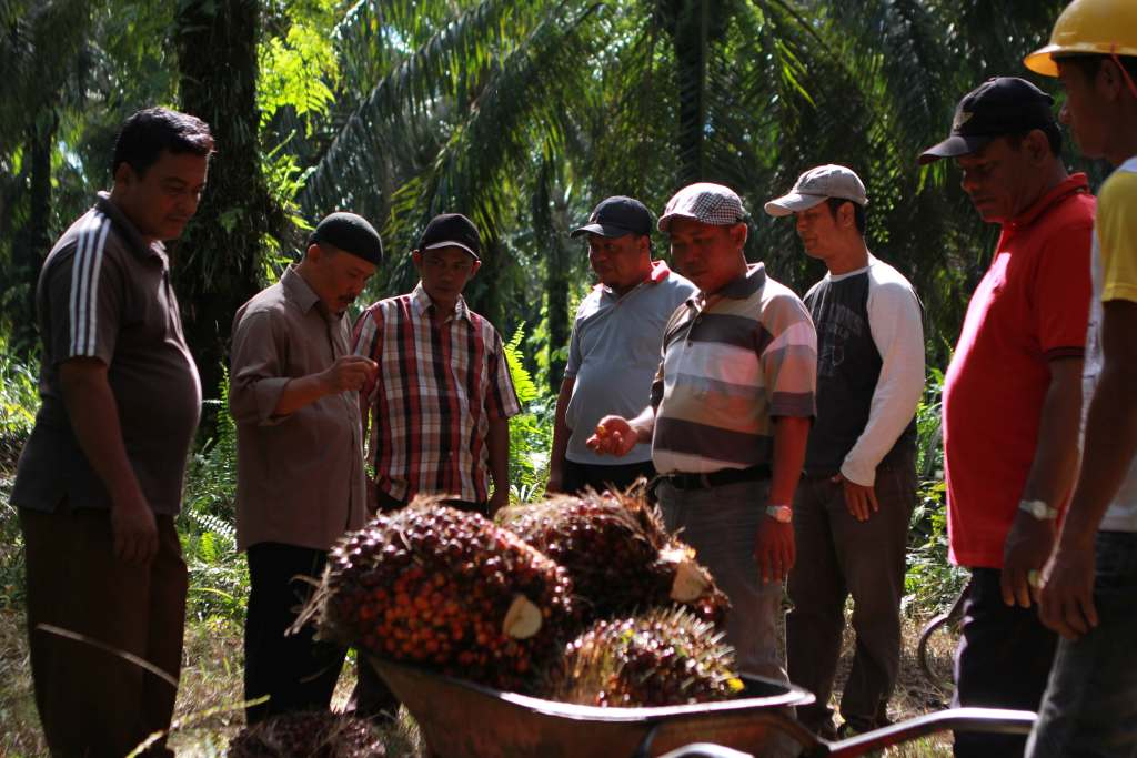 Beyond Traceability to the Plantation: A Responsible Palm Oil Supply Chain