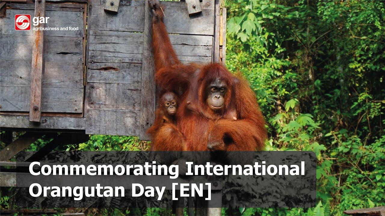 Commemorating International Orangutan Day